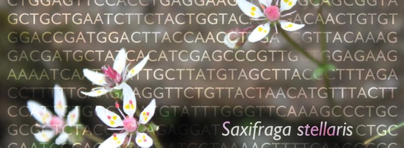 Noddwch God-bar DNA