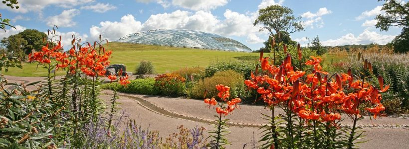 High summer at the National Botanic Garden of Wales