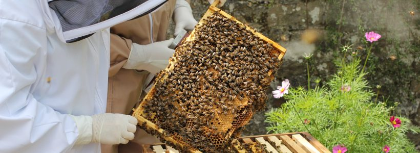 From eight to (nearly) eight hundred: an update on honey sampling from around the UK