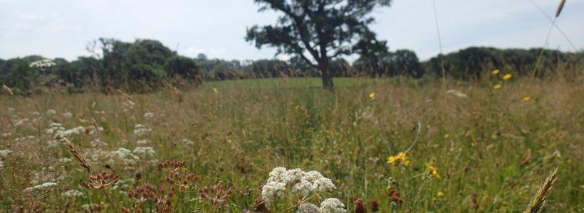 Green hay experiment a spectacular success